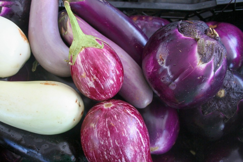 Eggplant In Every Color