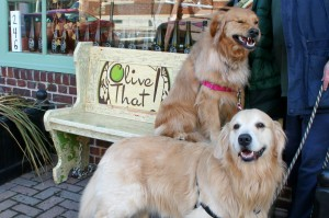 Reagan photobombs Boomer on the Olive That bench