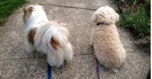 . Ricky and Rosie Neighborhood Watch