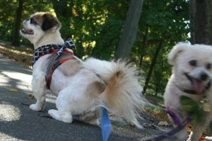 rosie photobombs ricky kingsland park nutley october 010