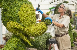 A Disney topiary design specialist works behind the scenes at the Walt Disney World Horticulture Center to blend color and add detail that enhances the natural organic material used in the Mickey Mouse and other topiaries on display at the Epcot International Flower & Garden Festival at Walt Disney World Resort in Lake Buena Vista, Fla. (Matt Stroshane, photographer)