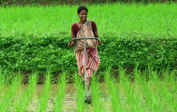 Reducing water use 20-50% and enabling women to weed fields in a fraction of the time (upright not bent over) with a simple weeder are two reasons why More Crop Per Drop is WaterSmart and WomenStrong.