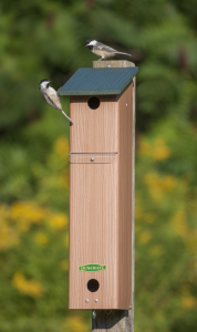 SONGBIRD HOUSE AND ROOSTING BOX