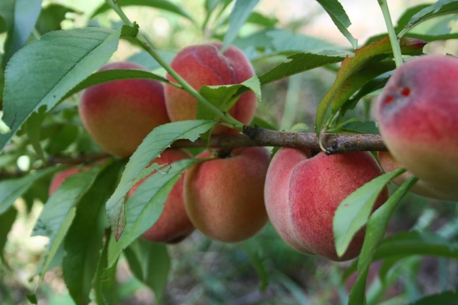 Peaches 049