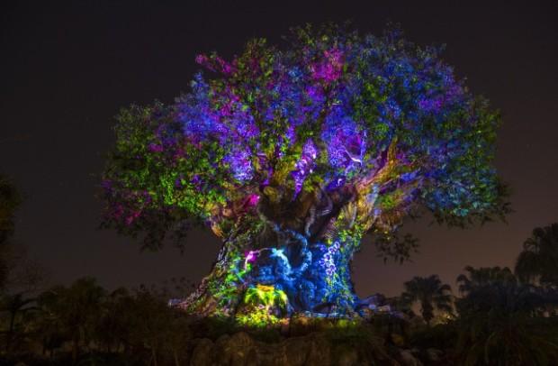 Disney DAK Tree Of Life Night 1